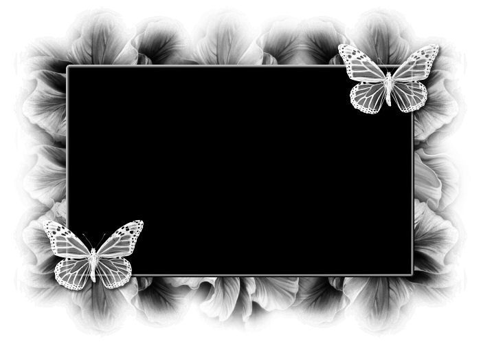 cadre photo filtre papillons