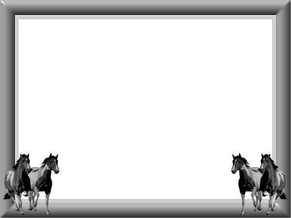 cadre photo filtre cheval